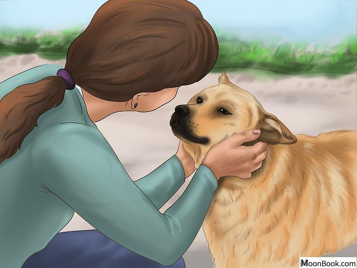 以Get Your Dog to Sleep Step 7为标题的图片