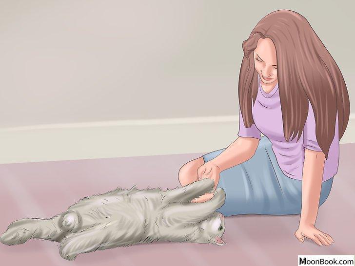 以Have Fun with Your Cat Step 15为标题的图片