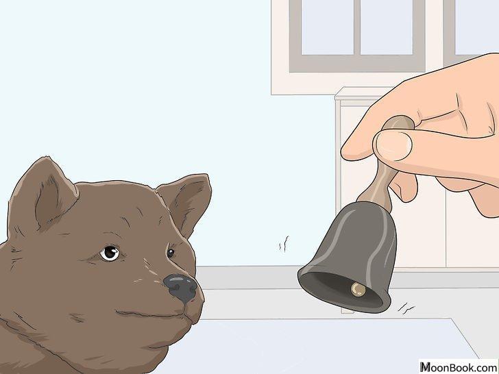以House Train Your Dog Step 10为标题的图片
