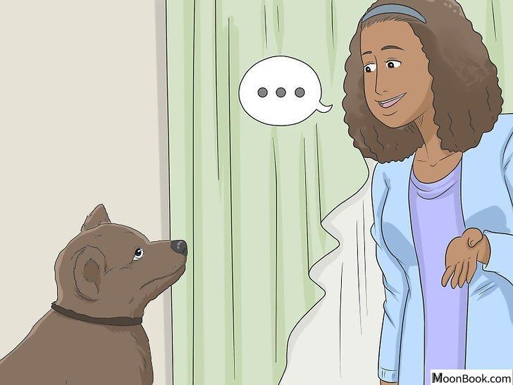 以House Train Your Dog Step 11为标题的图片