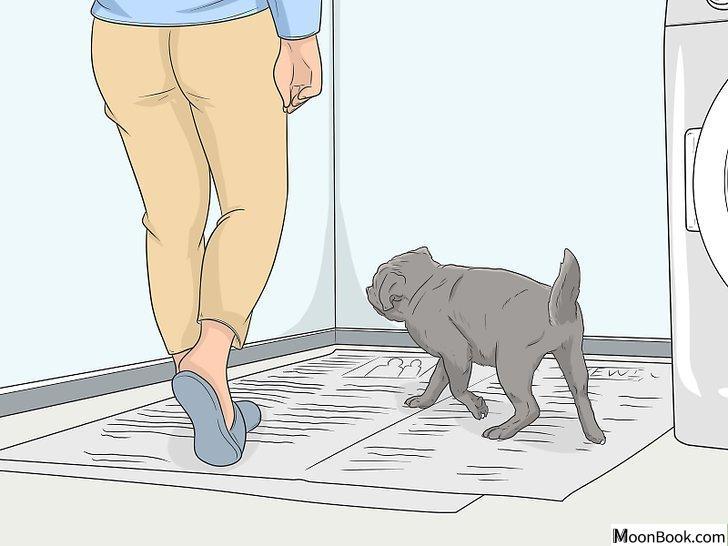 以House Train Your Dog Step 15为标题的图片