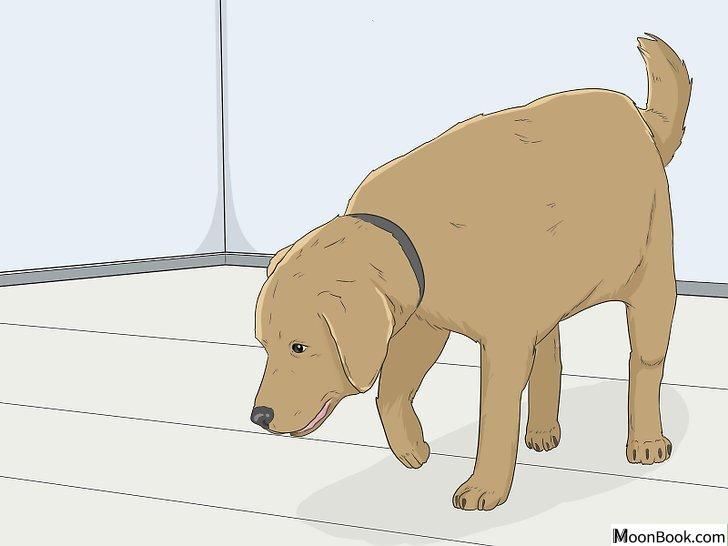 以House Train Your Dog Step 3为标题的图片