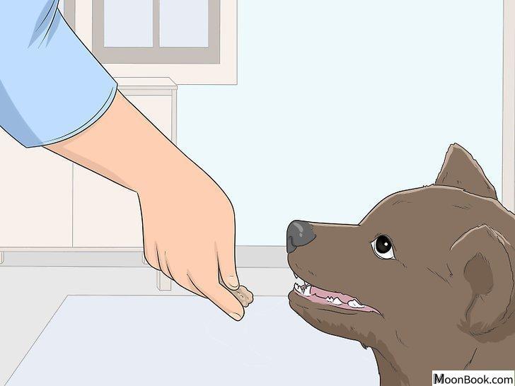 以House Train Your Dog Step 8为标题的图片