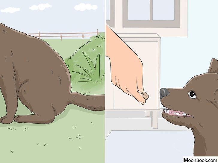 以House Train Your Dog Step 9为标题的图片