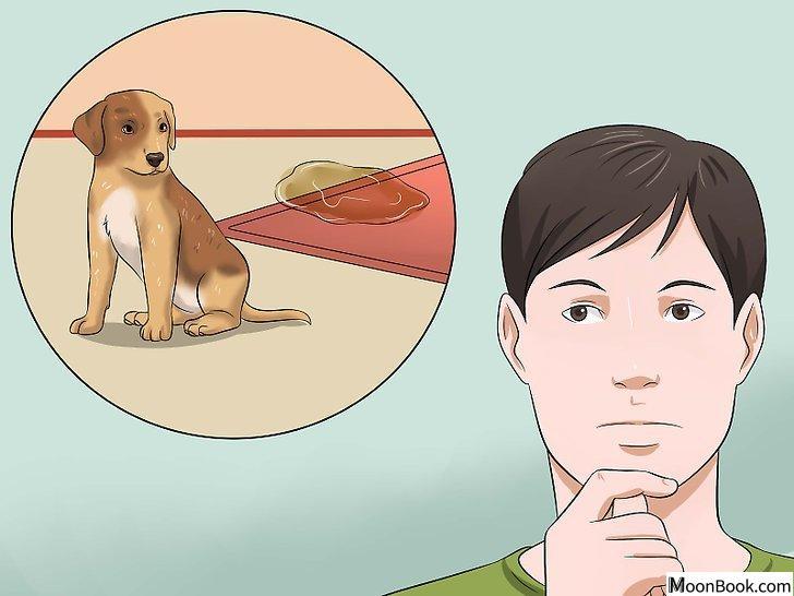以House Train a Puppy Step 1为标题的图片