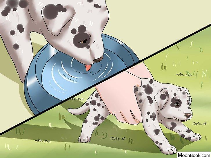 以House Train a Puppy Step 11为标题的图片