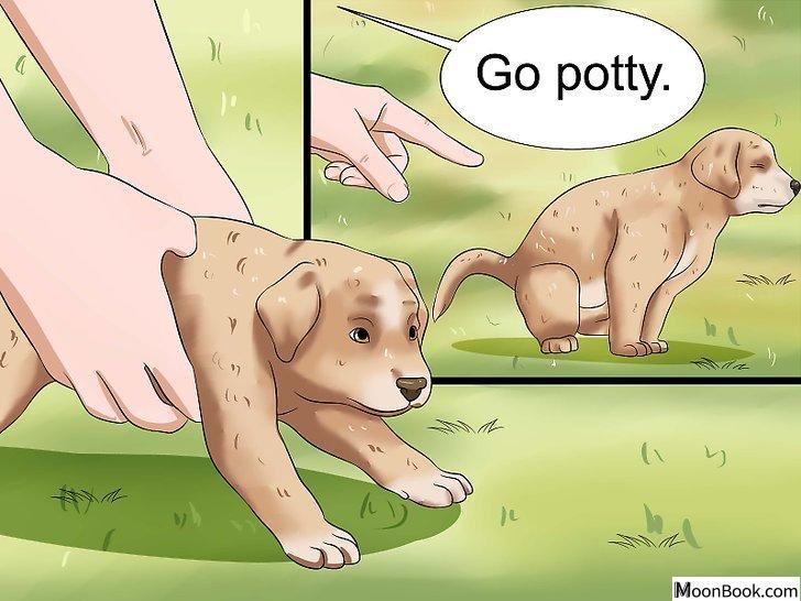 以House Train a Puppy Step 14为标题的图片