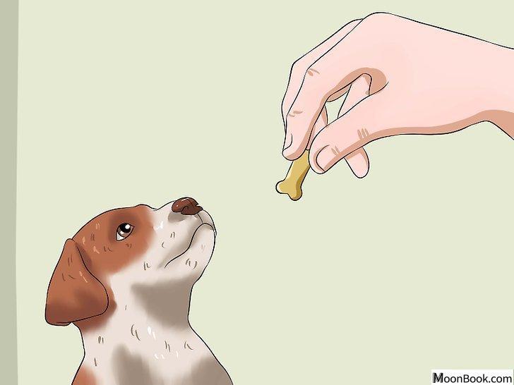 以House Train a Puppy Step 15为标题的图片