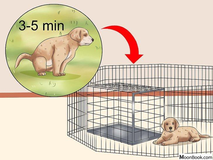 以House Train a Puppy Step 16为标题的图片