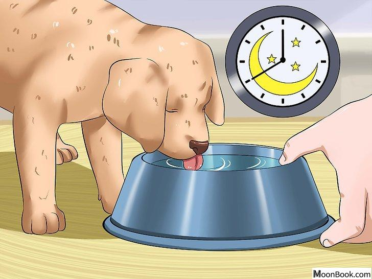 以House Train a Puppy Step 18为标题的图片