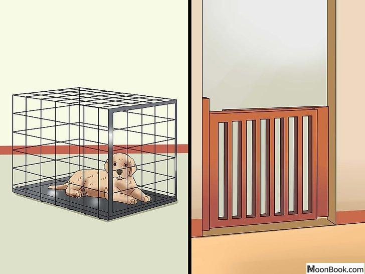 以House Train a Puppy Step 20为标题的图片