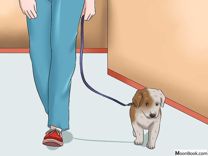 以House Train a Puppy Step 21为标题的图片