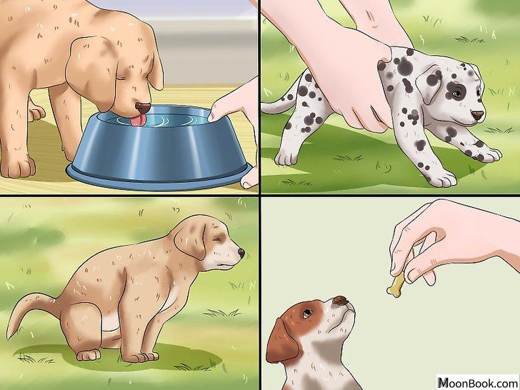 以House Train a Puppy Step 22为标题的图片
