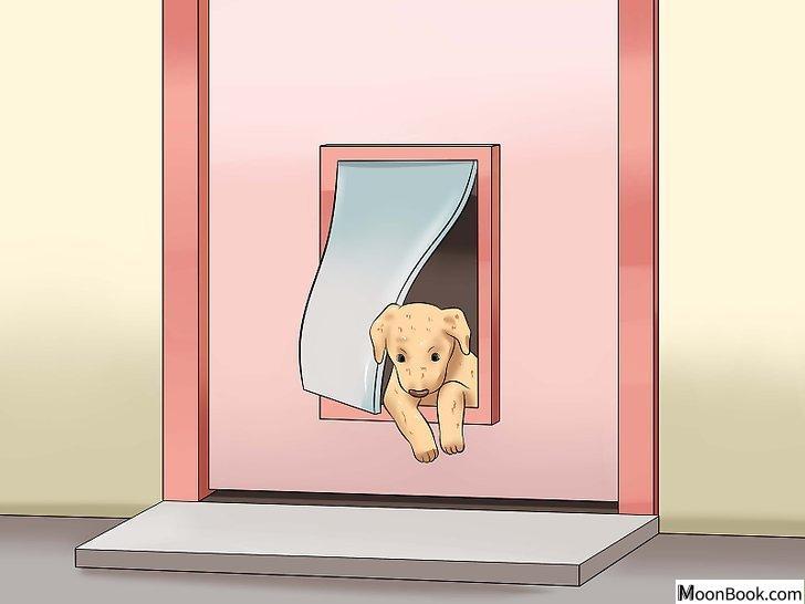 以House Train a Puppy Step 23为标题的图片