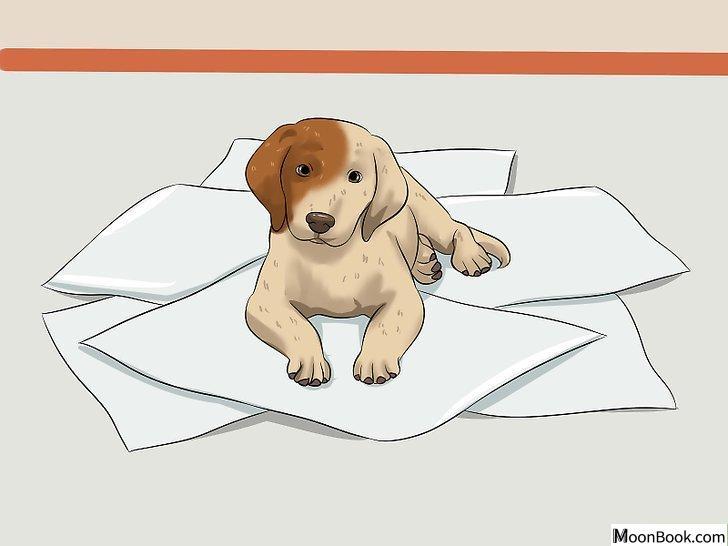 以House Train a Puppy Step 24为标题的图片