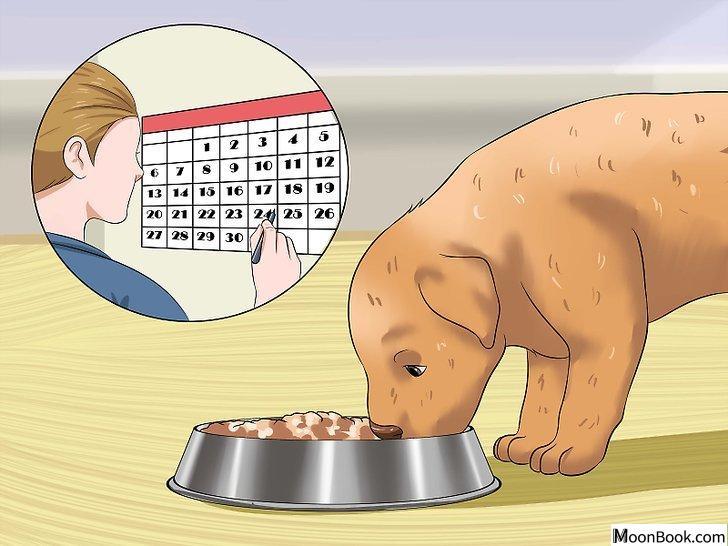 以House Train a Puppy Step 9为标题的图片