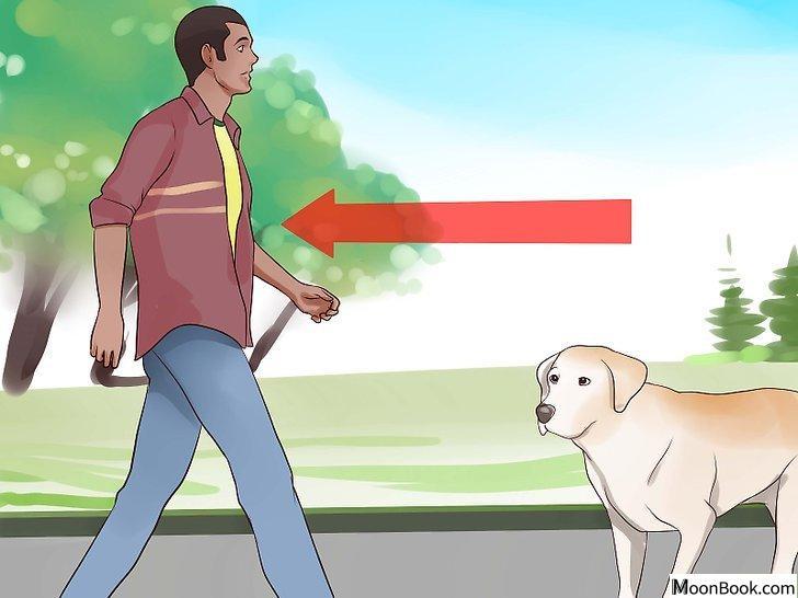 以Keep Your Dog from Chasing Cats Step 14为标题的图片