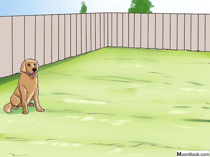 以Keep Your Dog from Chasing Cats Step 17为标题的图片