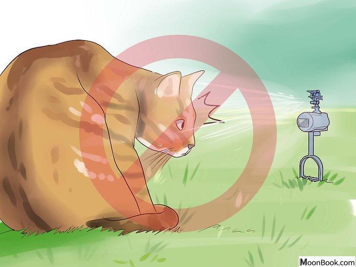 以Keep Your Dog from Chasing Cats Step 18为标题的图片