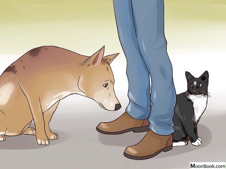 以Keep Your Dog from Chasing Cats Step 20为标题的图片