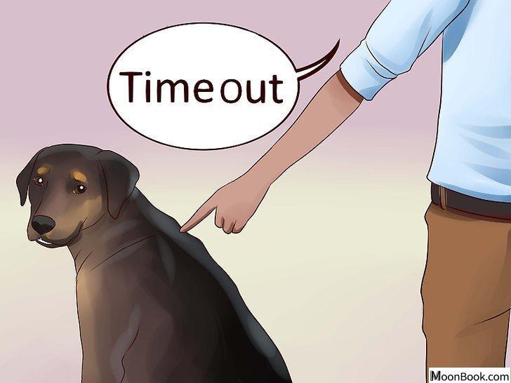 以Keep Your Dog from Chasing Cats Step 21为标题的图片
