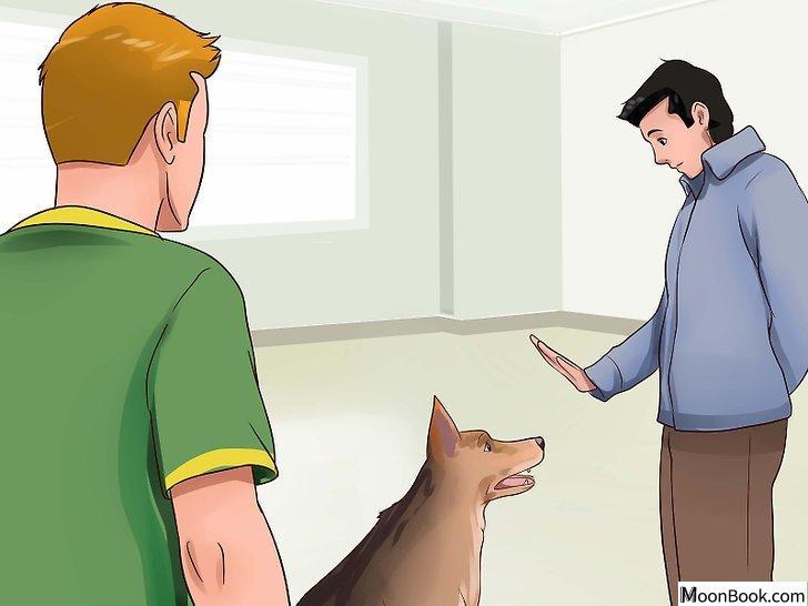以Keep Your Dog from Chasing Cats Step 23为标题的图片