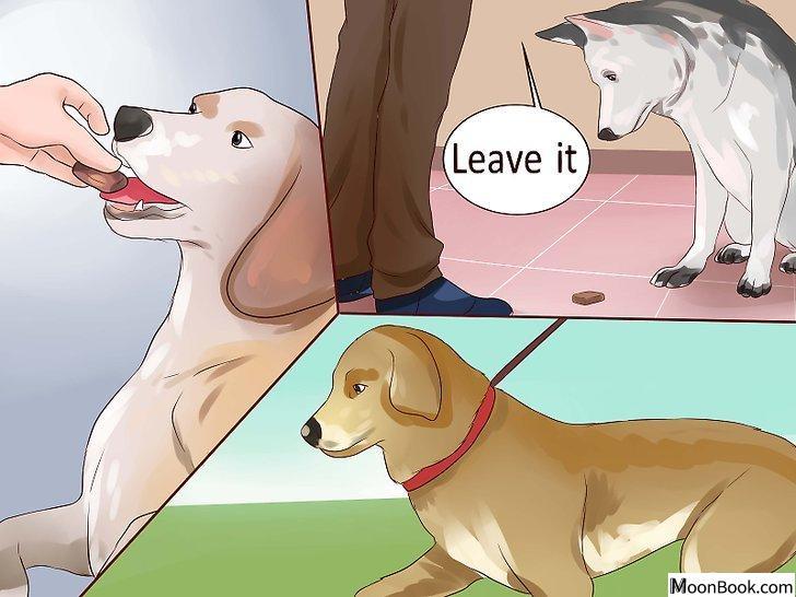 以Keep Your Dog from Chasing Cats Step 3为标题的图片