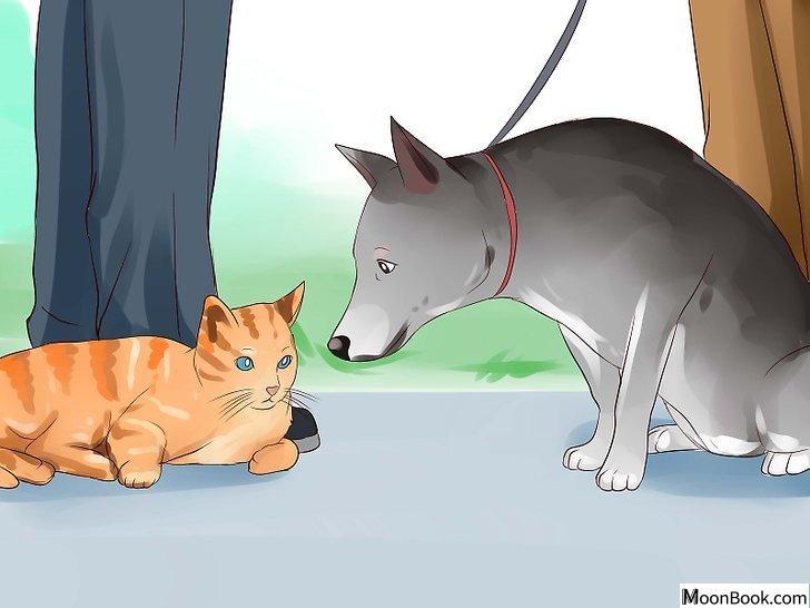 以Keep Your Dog from Chasing Cats Step 4为标题的图片