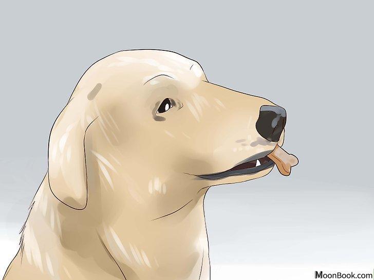 以Keep Your Dog from Chasing Cats Step 8为标题的图片