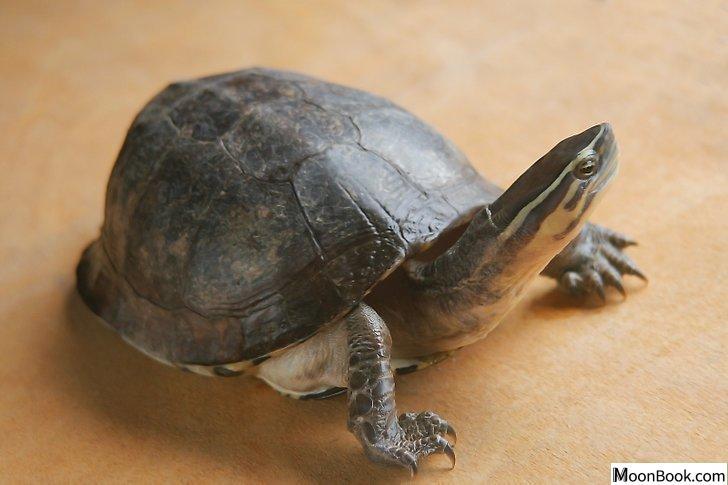 以Pet a Turtle Step 6为标题的图片