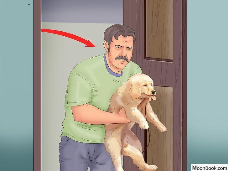 以Potty Train a Puppy in an Apartment Step 1为标题的图片
