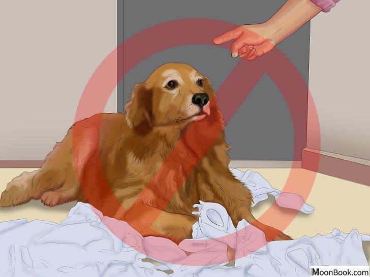 以Potty Train a Puppy in an Apartment Step 10为标题的图片