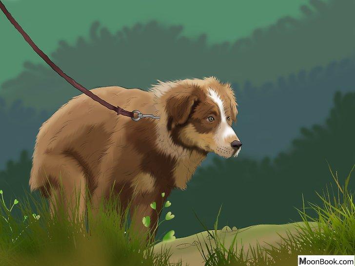 以Potty Train a Puppy in an Apartment Step 3为标题的图片
