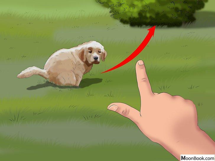 以Potty Train a Puppy in an Apartment Step 4为标题的图片