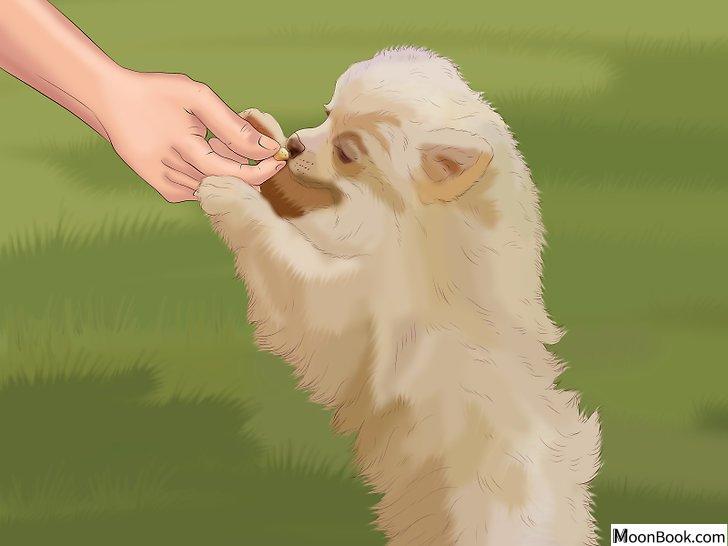 以Potty Train a Puppy in an Apartment Step 5为标题的图片