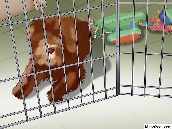 以Potty Train a Puppy in an Apartment Step 6为标题的图片