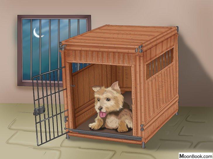 以Potty Train a Puppy in an Apartment Step 8为标题的图片