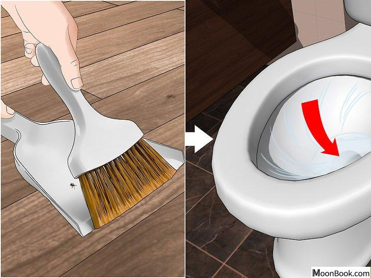 以Prevent Stink Bugs Step 12为标题的图片