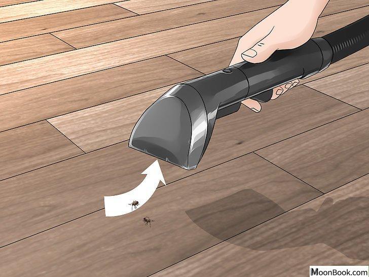 以Prevent Stink Bugs Step 13为标题的图片