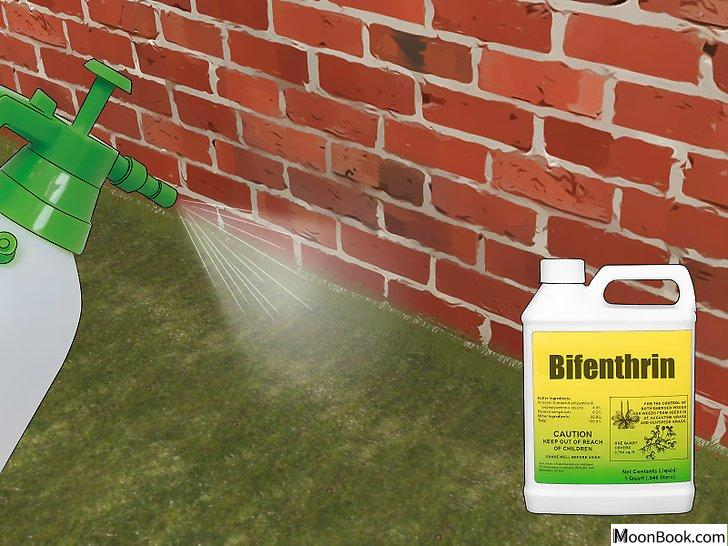 以Prevent Stink Bugs Step 8为标题的图片