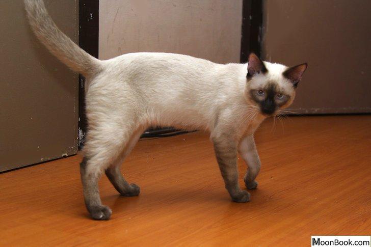 以Remove Cat Urine from Wood Floors Step 11为标题的图片