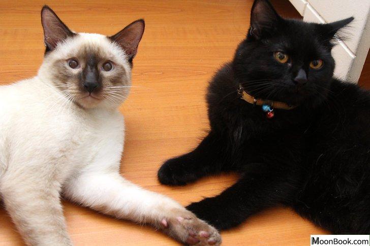以Remove Cat Urine from Wood Floors Step 13为标题的图片