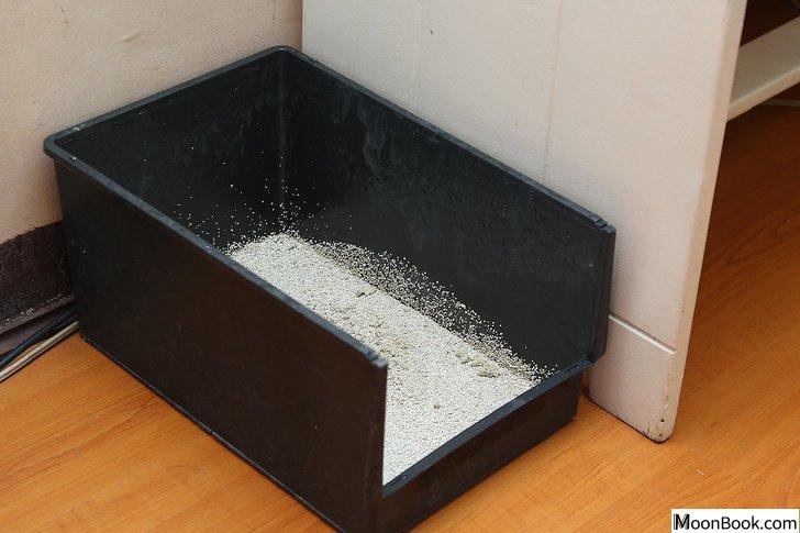 以Remove Cat Urine from Wood Floors Step 14为标题的图片