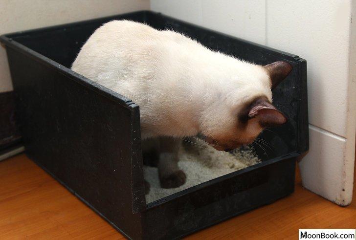 以Remove Cat Urine from Wood Floors Step 16为标题的图片