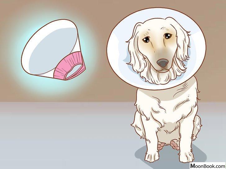 以Remove a Dog's Skin Tags at Home Step 11为标题的图片