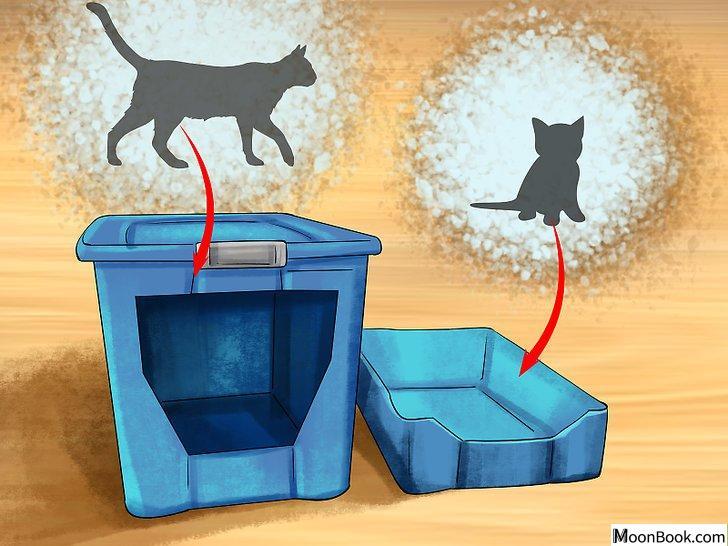 以Retrain a Cat to Use the Litter Box Step 13为标题的图片
