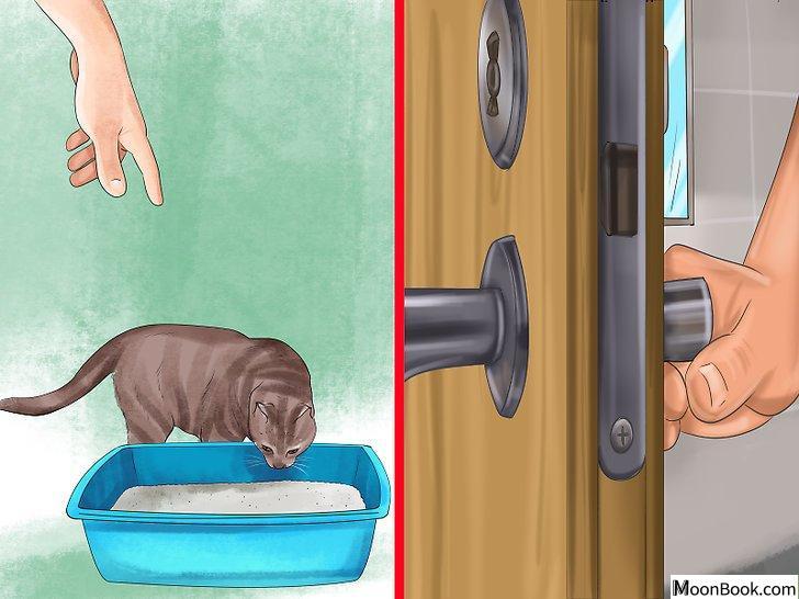 以Retrain a Cat to Use the Litter Box Step 15为标题的图片
