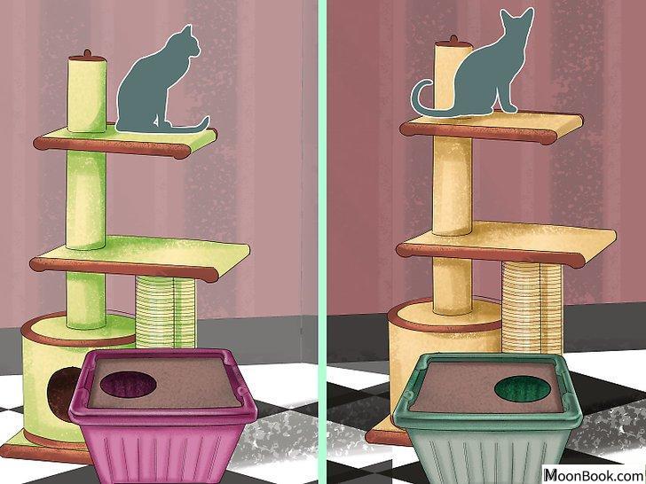 以Retrain a Cat to Use the Litter Box Step 16为标题的图片