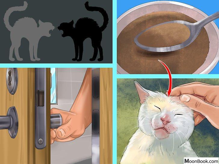 以Retrain a Cat to Use the Litter Box Step 17为标题的图片