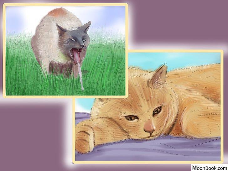 以Retrain a Cat to Use the Litter Box Step 19为标题的图片
